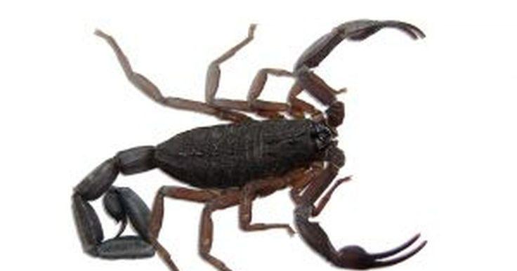 Como repelir escorpiões. Quando você se aventura em corridas, caminhadas, acampamentos, caça ou qualquer outra atividade no deserto, mais cedo ou mais tarde é provável que encontre um escorpião. Na maior parte do tempo, os escorpiões tem muito mais medo de você do que você deles. Embora não exista um repelente para escorpião disponível no mercado, existe um produto ...