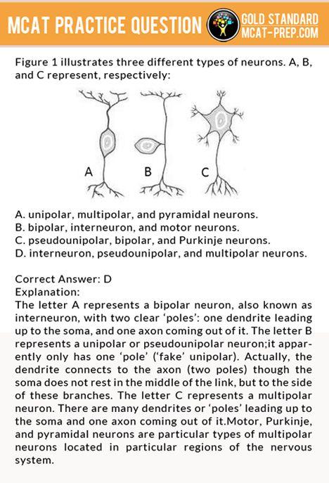 Practice essay questions for mcat