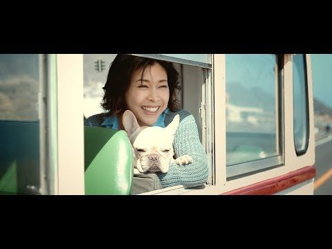 〈TVCM〉EOS Kiss M「Kiss is my life.」篇(30秒)竹内結子・クルミちゃん出演 楽曲SingTuyo(しんつよ)【キヤノン公式】 - YouTube