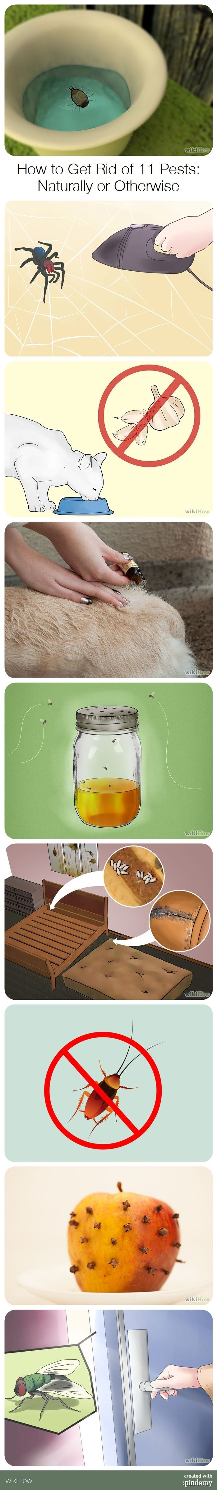 How to Get Rid of 11 Pests: Naturally or Otherwise (Stink Bugs, Spiders, Fleas, Gnats, Bed Bugs, Flies, Ticks, Ants, Wasps and Bees, Mosquitoes, Cockroaches) with a PSA for Cat Owners! #home #gardening #animals