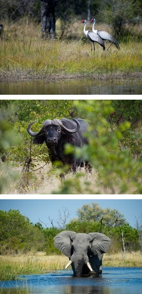 Botswana Safaris to Banoka Bush Camp in the Okavango Delta