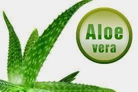 Aloe Vera: Curarsi con l'Aloe Vera