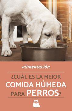 900 Ideas De Info Pet En 2021 Perros Mascotas Animales