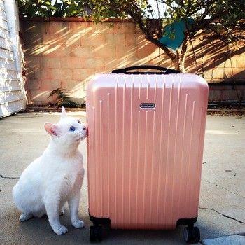 こちらは、北米限定のパールピンク。 男性的なリモワが、ネコもくっつきたくなるほどキュートな色合いに。 訪問国の気候にもよりますが、3~5泊までOKの容量なのに、5キロを切る軽さが魅力です。