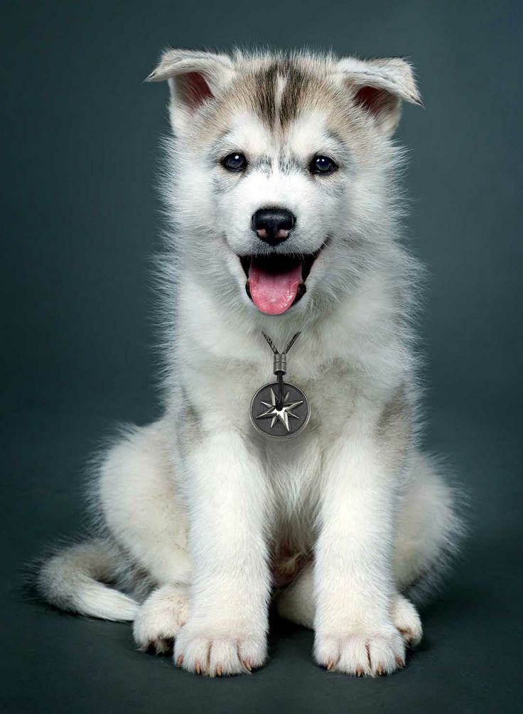 A supreme escape artist and energetic outdoor type - This compass inspired pendant by Cai is the perfect choice for our gorgeous husky pup. https://www.facebook.com/InutiDesignerJewelleryLtd