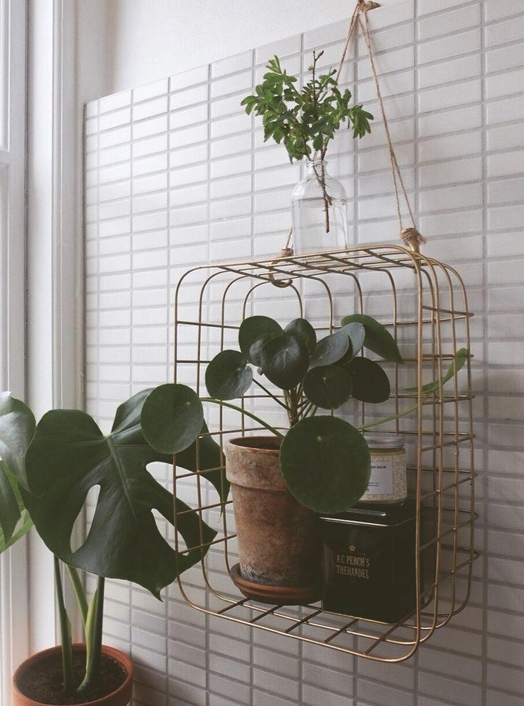 Planter på væg