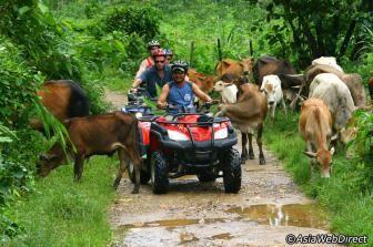 Elephant Trekking & ATV Tour in Phang Nga - Day Trip - Departure from Phuket, Khao Lak and Krabi