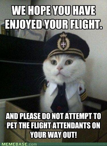 Don't Pet the flight attendants!