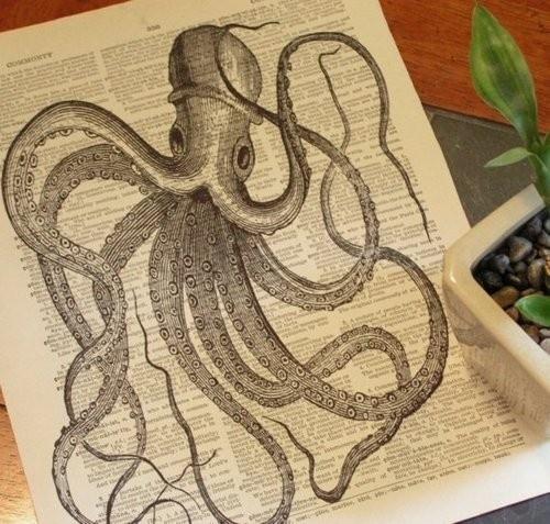 Octopus. Octopus. Octopus.
