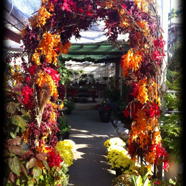 Autumn Archway at the shop :)