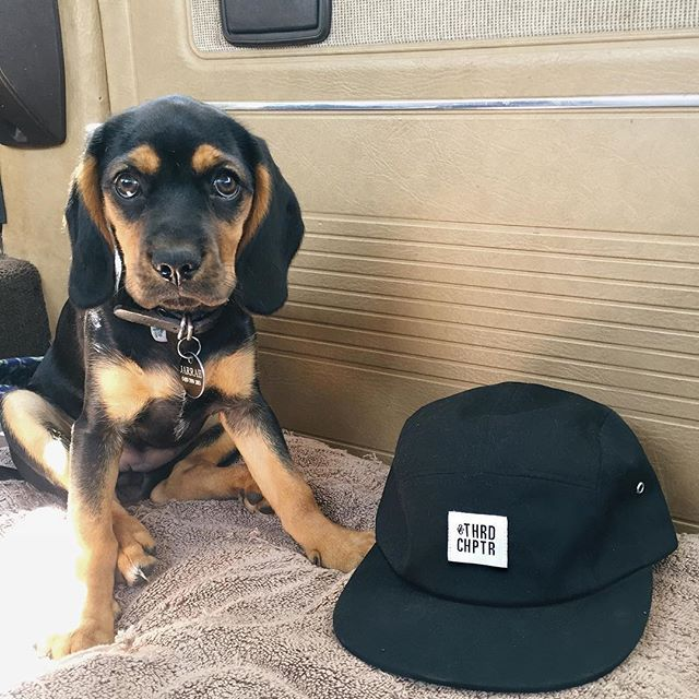 Get this THRD 5 panel online now at 3RDCHAPTER.com. puppy not for sale.  #ThirdChapter