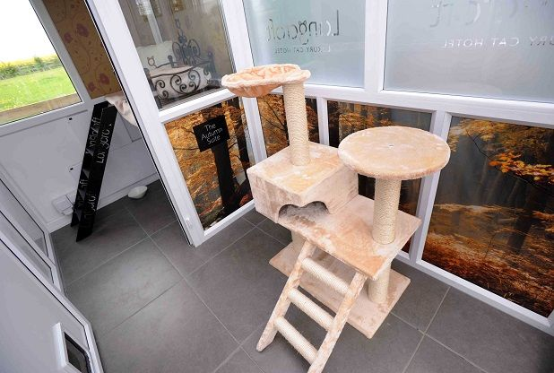 """""""A luxury cat hotel is opening in Margate and people are already booking ahead."""" Read more at http://www.kentlive.news/a-luxury-cat-hotel-is-opening-in-margate-and-people-are-already-booking-ahead/story-30277885-detail/whatson/story.html#x3J1rm2ogm5kKizk.99"""