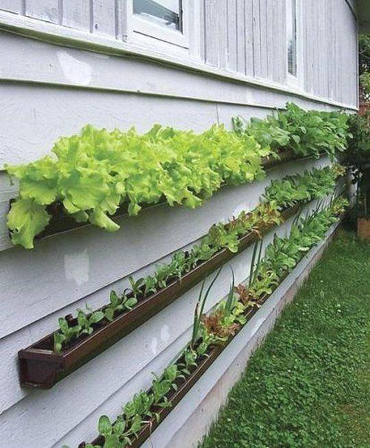 5 Vertical Vegetable Garden Ideas For Beginners: Garden Row Planner In 2020