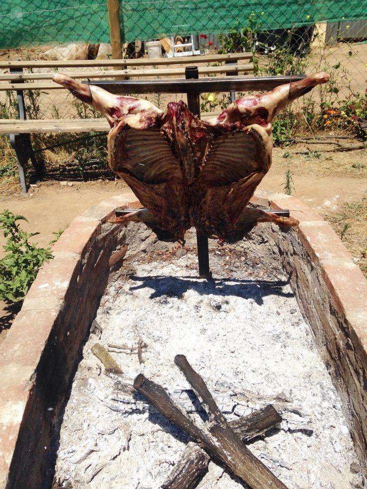 Cordero al palo en Curacaví