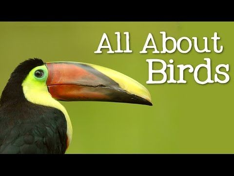 All About Birds for Children: Animal Learning for Kids - FreeSchool - YouTube