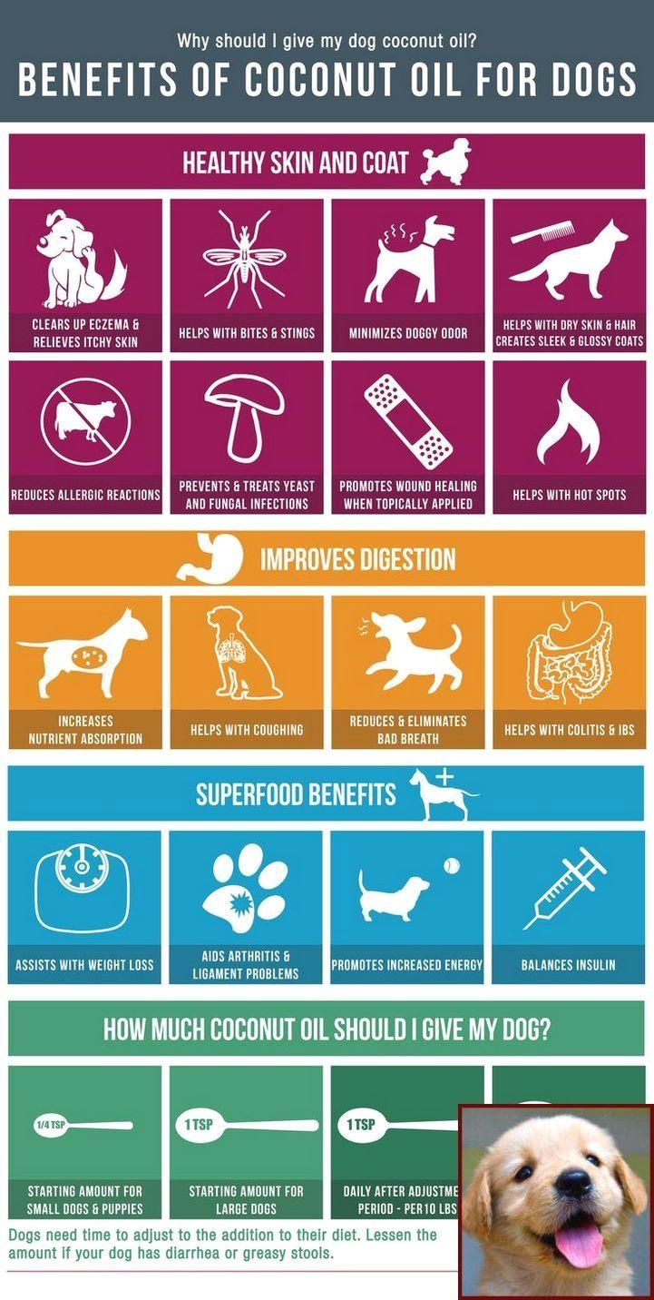 Dog Behavior Rehab Yelp and Dog Training Courses Dublin