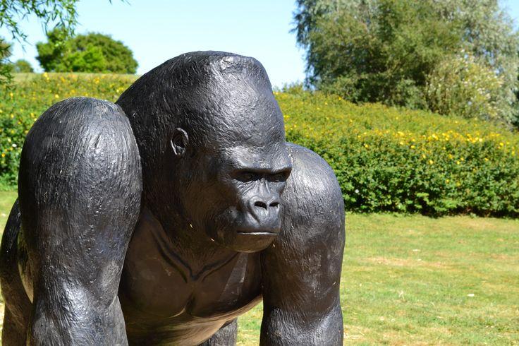 La Vallée des Singes est un parc zoologique situé à Romagne, dans la Vienne, en France.
