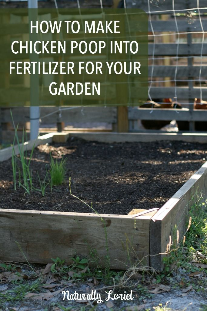how-to-make-chicken-poop-into-fertilizer-for-your-garden-naturally-loriel
