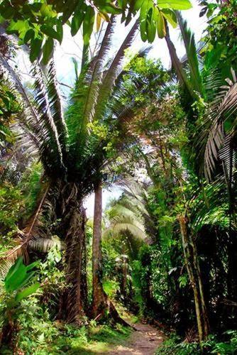 Cockscomb Wildlife Sanctuary and Jaguar Preserve, Belize National Parks - $5US entry - about $5US tubing