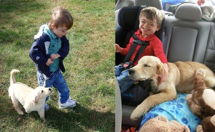 Boy With Down Syndrome & Autism Gets A Service Puppy – And It's The Cutest Thing Ever
