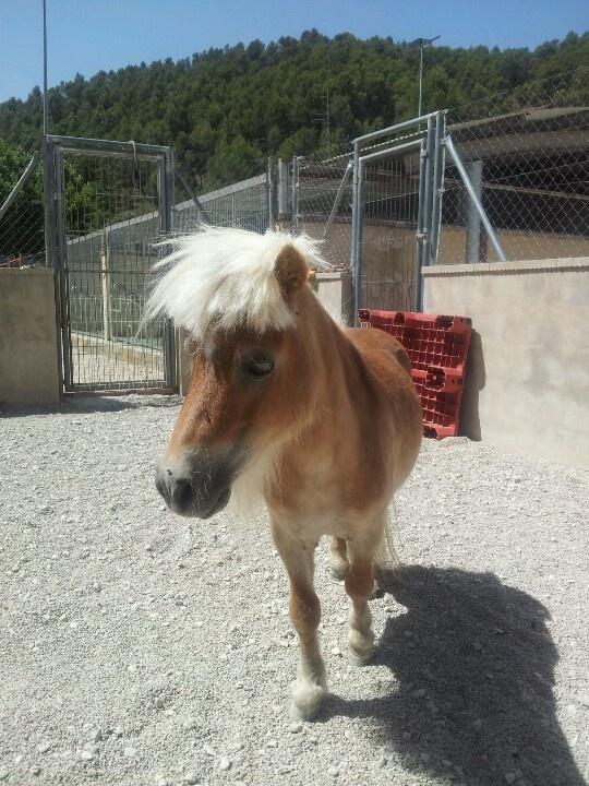 Pony rescatado de un incendio