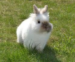 kanin - Sök på Google