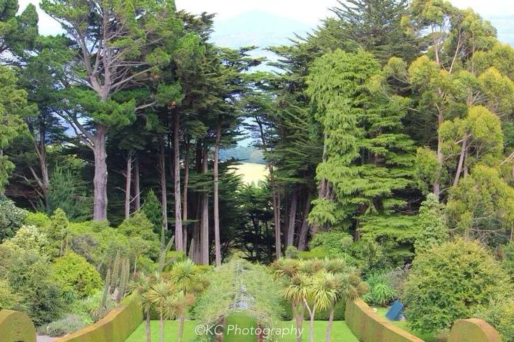 Through the forest towards Dunedin from the Larnach Castle tower Taken by KC Photography