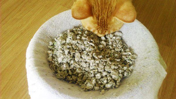 Faça você mesmo areia ecológica para o seu gato – sem gastar nada! economizar…