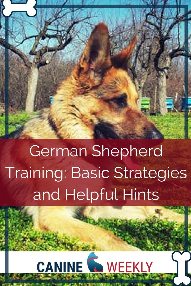 Pin By Cora Jensen On Animals In 2020 German Shepherd Training