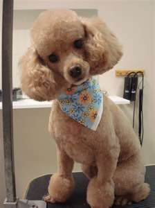 Wag The Tail Grooming Salon - Services, nice cut