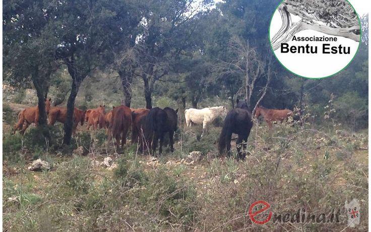 Funtana Is Arinus – Funtanamela: 10 km con Bentu Estu
