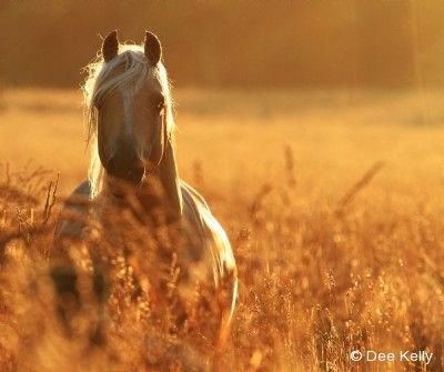 Rising at Sunset by Dee Kelly via 2015 Equine Ideal Online Photography Contest