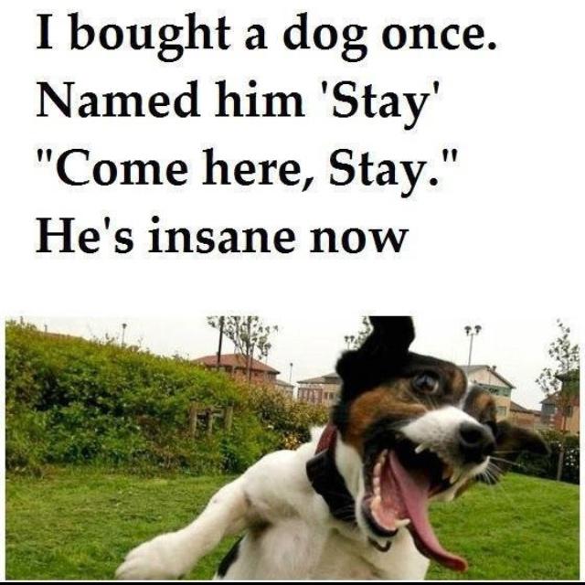 Hahahahaa: Animals, Stay, Dogs, Funny Stuff, He S Insane, Funnies, Humor