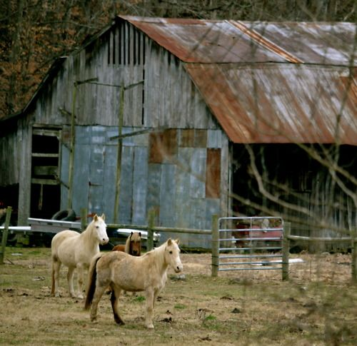 Old Barns, Barns And Horses