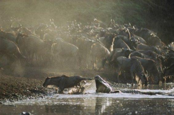 20 Incredible photos of AFRICA's WILD ANIMALS