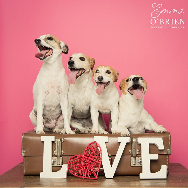 Johannesburg based professional pet photographer held a photo booth at the Sandton SPCA on Valentines days, read on to find out more and view the photos.