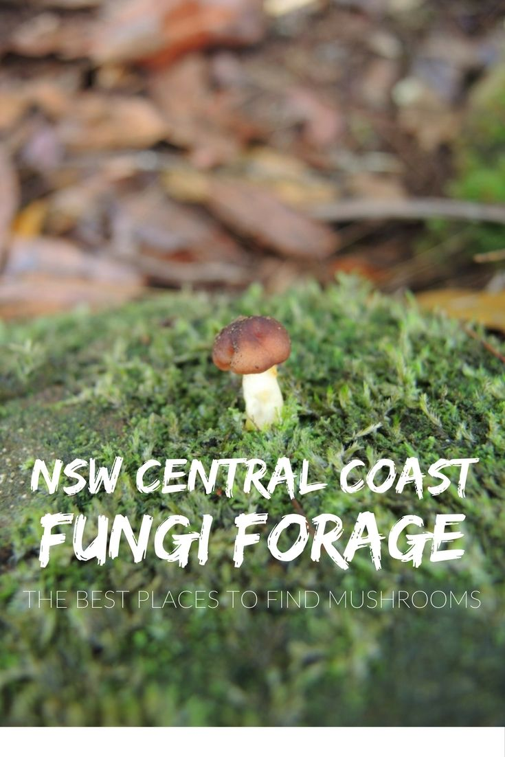 Often overlooked, the Central Coast's national parks are home to a wide variety of beautiful and sometimes surprising mushroom species – or fungi – and fungi foraging is best done throughout the cooler, often wetter, months of autumn.
