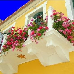 10 Tips for Beautiful Balconies, like filling it with flowers to distract from your drying laundry (via Flickr).