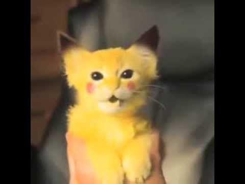I have a Pikachu kitty! (Vine By: Zach King) - YouTube