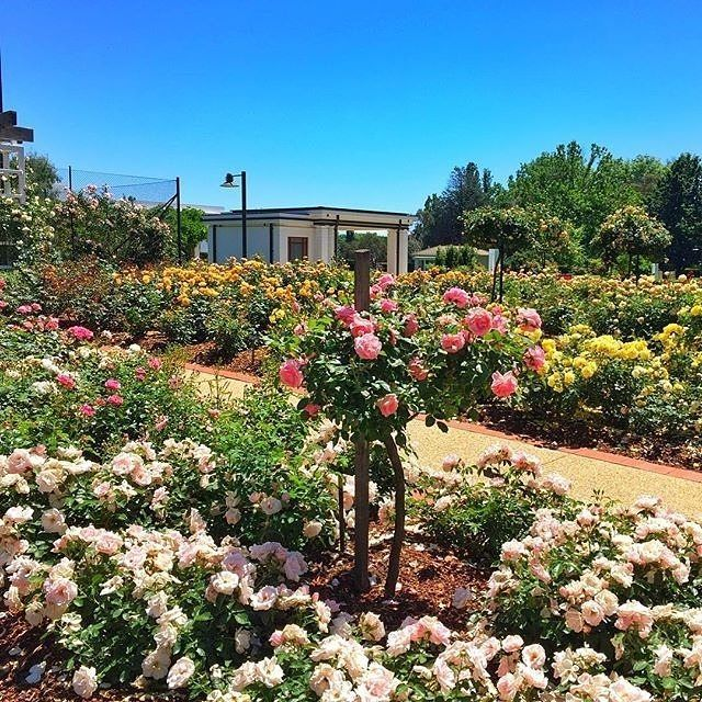 """""""A wander around the Old Parliament House gardens is all my heart desires."""" Instagrammer @azlinaw captured this sensational spring moment in the rose gardens of @moad.aus. #visitcanberra"""