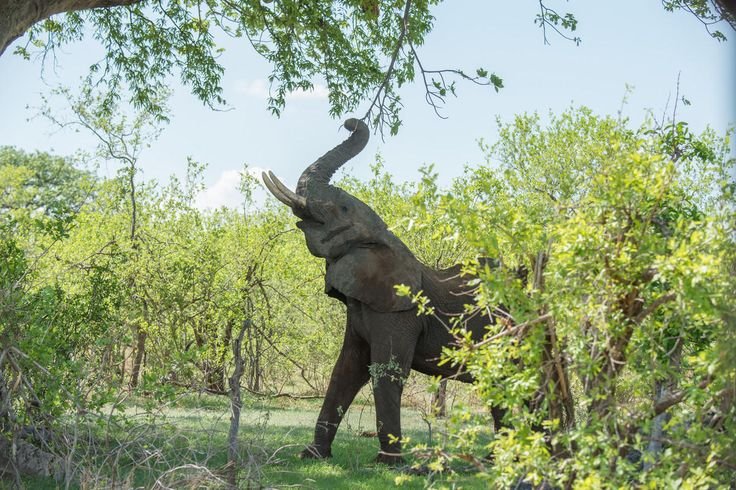 CELEBRATION AT LAST! : China announced today that it will close its domestic commercial elephant ivory trade in 2017. President Xi Jinping had announced last year that the country would take this action and now there is a timeline—great news for elephants.