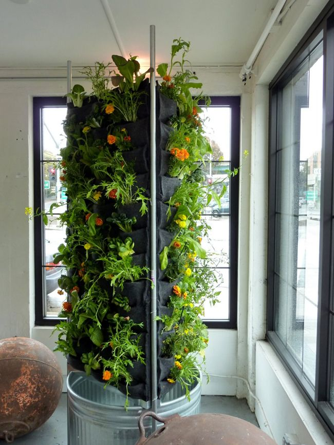 88 best images about Vertical Gardening on Pinterest