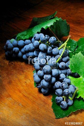 Grappolo d'uva di vitigno Cesanese di Olevano Romano