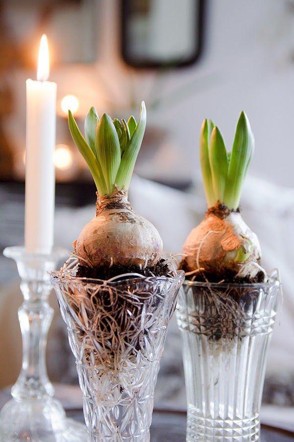 Kul idé... Men som doftallergiker fungerar det inte med hyacinter... Tulpaner kanske