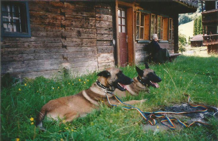 Acor und Amaroc, sind mir denn noch etwa ein Jahr geblieben. Bis sie ausgebildet waren und und in den Dienst als Diensthunde gingen!