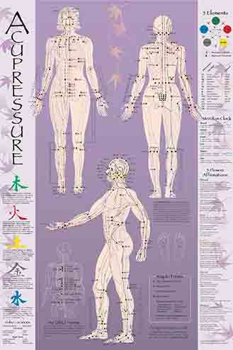 Acupressure & Acupuncture Point Charts & Meridian Charts