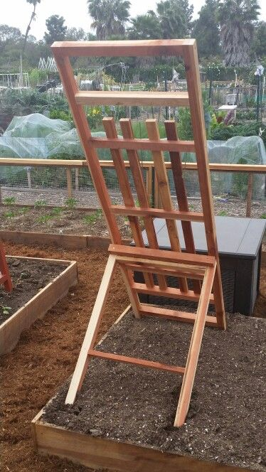 Custom designed cucumber/squash  trellis. Hinged for flexibility in position, easy of storage and ultimate  versatility. Built of long last redwood, with all screw construction.