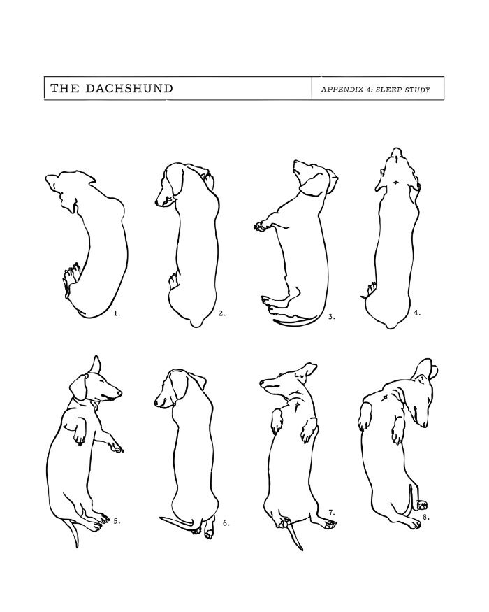 best 25 dachshund drawing ideas on pinterest daschund wiener dogs and dachshund art. Black Bedroom Furniture Sets. Home Design Ideas