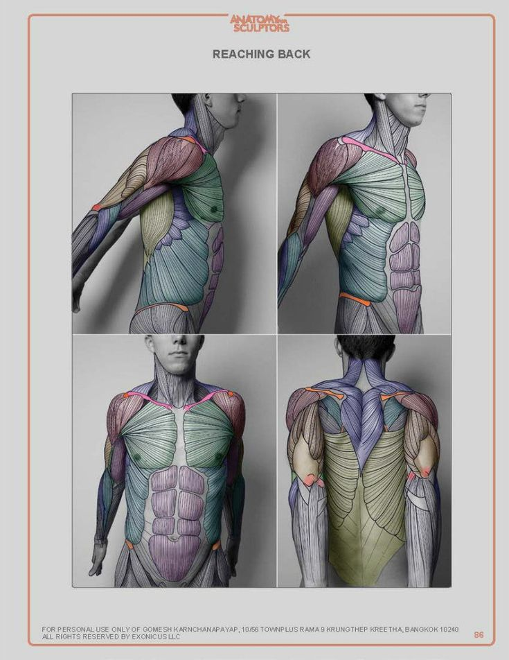589 Best Anatomy And Structure Images On Pinterest Human Body