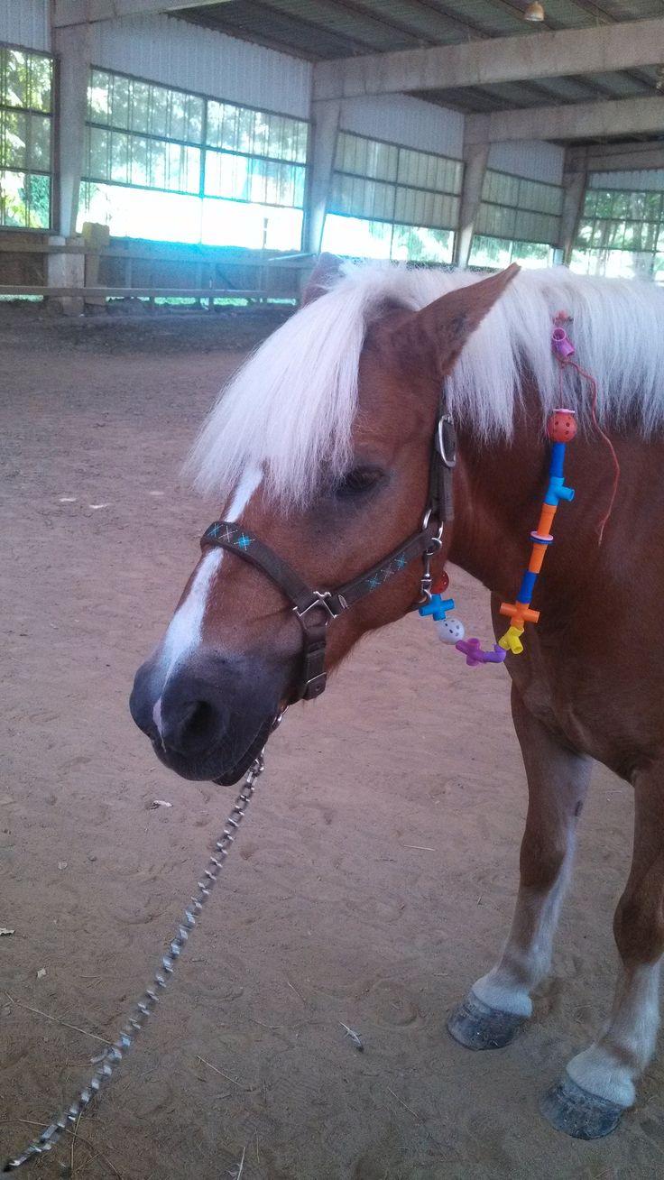 un collar para el caballo